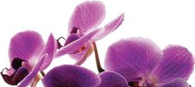 orchid logo bloemist